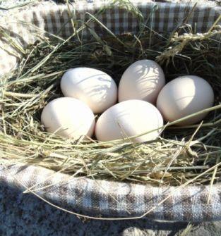 Jaja z Wypasionej Kurki