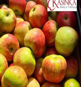 Jabłka Bochemia