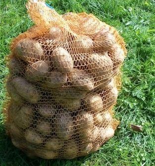 Ziemniaki Lord i Wineta