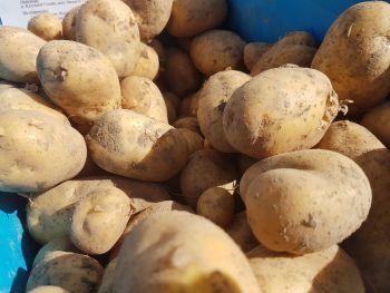 Ziemniaki jadanle białe