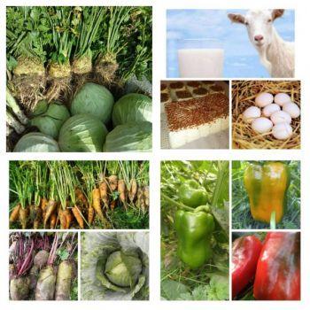 Warzywa naturalne bez chemii - prosto z pola