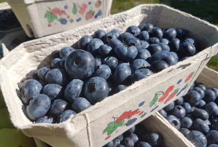 owoce borówki