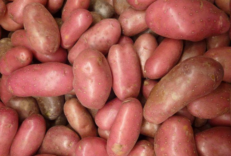 Ziemniaki jadalne czerwone